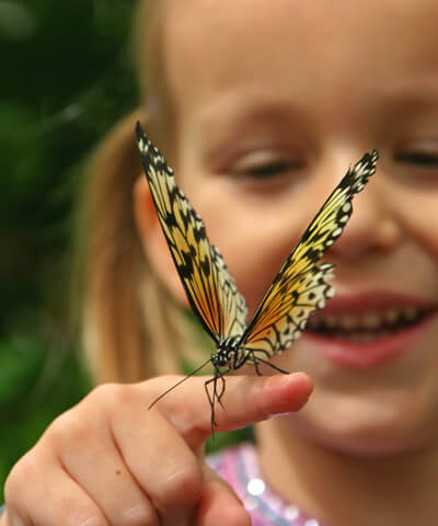 Young girl playing with a butterfly
